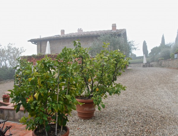 Lemon trees at Il Colle