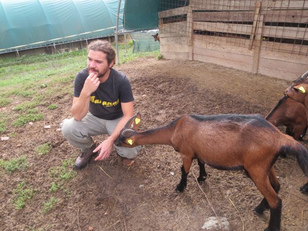 baby goat in love with Mateo